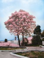 pink tree by ftourini-stock