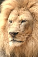 The King I by camera-buff