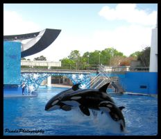 Killer Whales by PandaB88