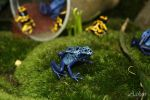 Blue frog by Aaken