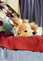 Dog on Bed by RTNinja