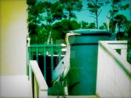 Everyday Life 18 by Jazui