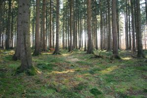 Forest Stock 35 by Sed-rah-Stock