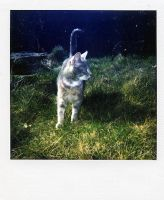 muffin polaroid by WrappedUpInBooks