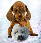 Is It a Snowball? by clarissa53