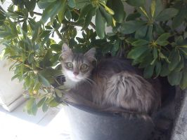 Laying on a pot by greece4life