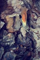 Butterfly Effect by simonerestivo