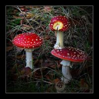 Mushrooms 2 by Rob1962