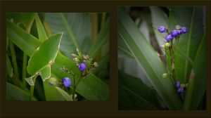 Purple Berry's by jennystokes