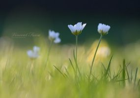Spring feeling... by vincentfavre