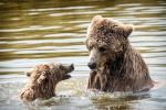 grizzly bear and cub by graphynu