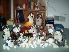 My husky collection by Aleu45