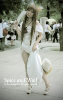 Spice and Wolf by 0010x777