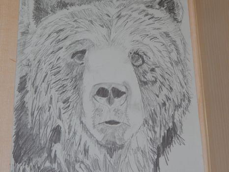 Grizzly Bear by thevoi