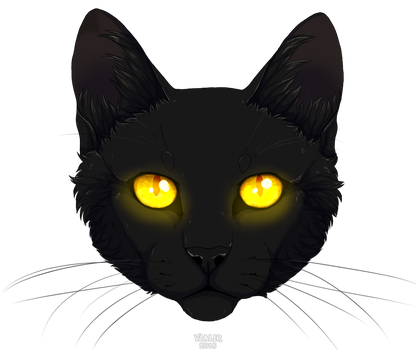 Black by Vialir