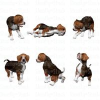 Beagle Puppies Stock Pack 1 by Shoofly-Stock