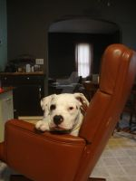Hey that's MY chair! by ronniengirls