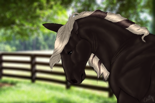 Horse by ChillyFish