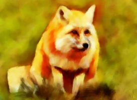 Red Fox by fmr0