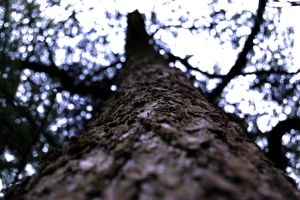 Trunk of the tree by JS92