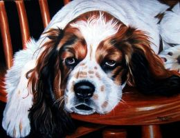 Sleepy Spaniel by anniecanjump