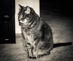 My Cat (Sammy) IV by mikeheer