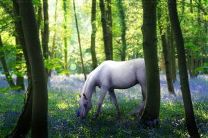 Bluebell by Lavander-Thistle