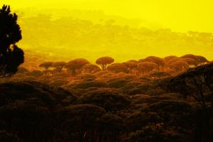 yellow by alfaowl