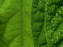 Water drops on leaves 27 by eco6org