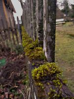 MOSSY FENCE by MouseClock