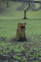 Stump by StarSlateStock
