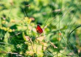 Papillon by WhiteHairLivia