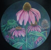 Coneflowers by k8lag
