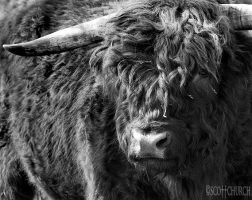 moo by scottchurch