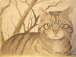 First steps with watercolors || European wildcat by rainhowlspl