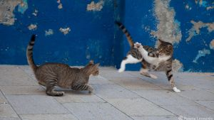 Feline fight move by Leox90