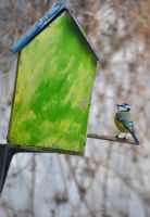 Blue tit II by Nanook94