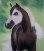 pinto miniature horse by angel-brittony-adams