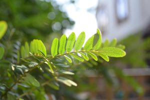 Leaves by Newt471