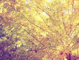 Autumn Tree 2 by lorewith-na-athend