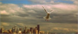 'Seagull Over Seattle' by AMayShulerphotogrphy