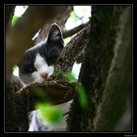 Montmartre cemetery cats 2 by MasterLudo