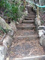 Stairs Through Woods 07 by Gracies-Stock
