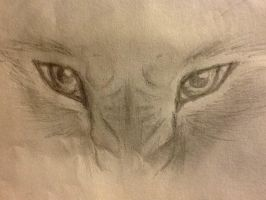 Angry Wolf Eyes by WolfLover0925