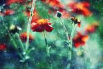 Geum coccineum by shadddow