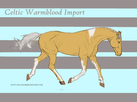 Celtic Warmblood Import #7 by ReeseS8