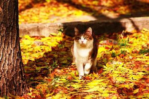 Autumn cat by Emmatyan