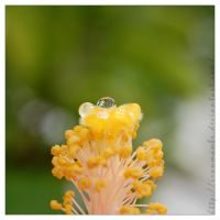 Droplet by ironmanbr