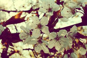 this is spring by m-aa-j