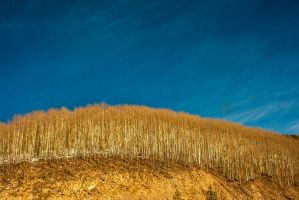 Trees on Hill by 5isalive